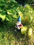 gnome fishing